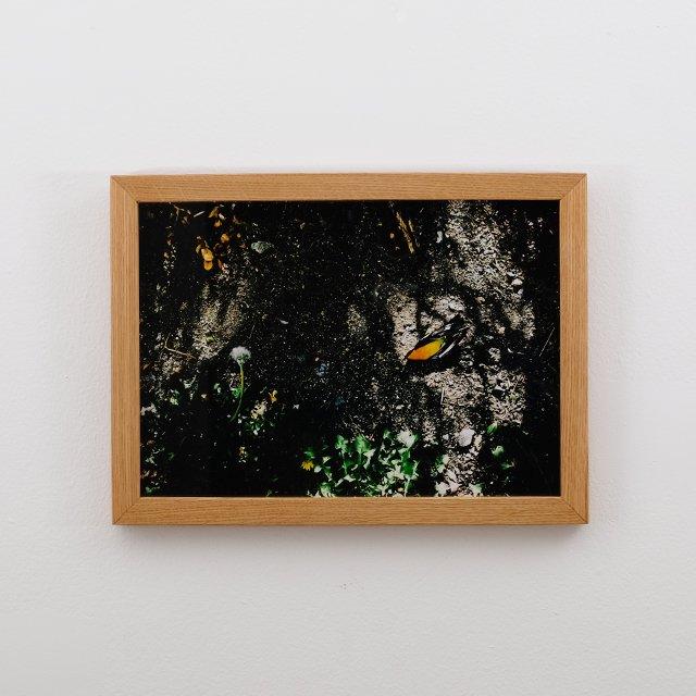 The film. by TAKASHI HAMADA. Photo Print with Wood Frame – Large